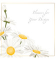 chamomile daisy flowers herbs bouquet isolated vector image vector image