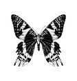 hand drawn madagascan sunset moth vector image vector image