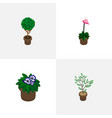 isometric flower set of houseplant flower vector image