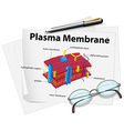Paper showing plasma membrane drawing vector image vector image