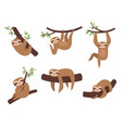 sloth characters cute sleepy animal on branch vector image vector image