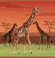 sunset african landscape colorful scene with vector image vector image