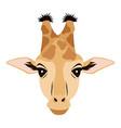 giraffe african animal safari zoo vector image