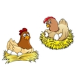 Hens incubating their eggs vector image vector image
