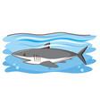 one gray shark swimming in ocean vector image