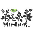set branch leaf silhouette vector image vector image