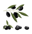 set of black Olives with leafs vector image vector image