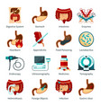 digestive system flat icon set vector image