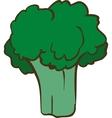 Fresh Ripe Broccoli vector image