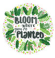 lettering bloom where you are planted decor vector image vector image