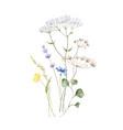 watercolor arrangement with wildflower vector image