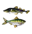 detailed two fishes ink hand drawn vector image vector image