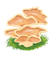 Heap plate of mushrooms mushroom family on grass vector image