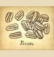 pecan ink sketch vector image vector image