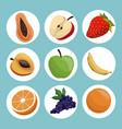set healthy fruit eating vector image