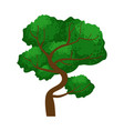spreading green tree element of a landscape vector image vector image