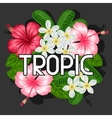 Background with tropical flowers hibiscus and vector image vector image