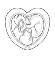 Graphic fetus inside the womb vector image