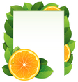 Orange slices and leaves vector image