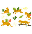 set of hand drawn leopards and tropical leaves vector image
