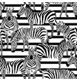 zebra pattern striped vector image