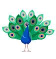 cartoon smiling peacock vector image