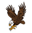 eagle wing fly hawk yellow vector image vector image