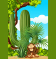monkey in the woods vector image vector image