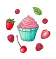 set cupcake raspberry strawberry cherry hand vector image