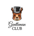 squirrel in top hat gentleman club lettering vector image