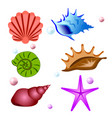 sea shells symbols collection set vector image