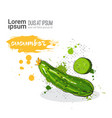cucumber hand drawn watercolor vegetables on white vector image vector image