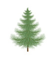 Fluffy green Christmas tree to decorate vector image vector image