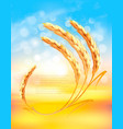 nature sunset background with ears wheat vector image vector image