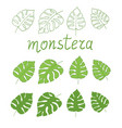 tropical monstera deliciosa leaves set vector image