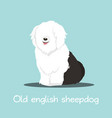 cute old english sheepdog graphic design vector image vector image