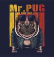 pug dog cool vector image vector image