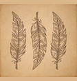 three bird feather isolated on white engraving vector image vector image
