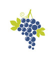 blue grapes natural fruit on white background vector image vector image