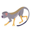 going forward monkey icon cartoon style vector image