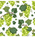 grape vine seamless pattern and leaves on white vector image