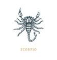 scorpio zodiac symbol hand drawn in engraving vector image