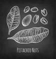 chalk sketch of pistachio nuts vector image vector image