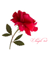 Holiday background with red beautiful rose vector image vector image