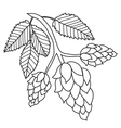 Hops plant black and white images isolated vector image vector image