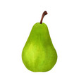 realistic green pear isolated on white background vector image vector image