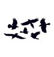 set soaring birds silhouettes vector image vector image