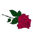 silhouette of rose vector image vector image