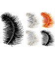 feather down fluffy vector image