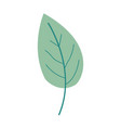 green color of simple leaf plant vector image vector image